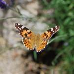 Vlinder kent  eveneens 3 niveaus, rups, pop en vlinder. Daar zal die zelf net zo veel mee bezig zijn, denk ik..:_)