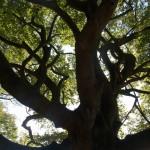 Bomen bloggen ook, geven de wind hun verhalen mee!