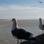 Kennen vogels vriendschappen?