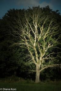 Een gewone boom