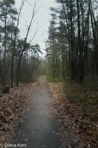 Volg je dit pad, of toch een ander?
